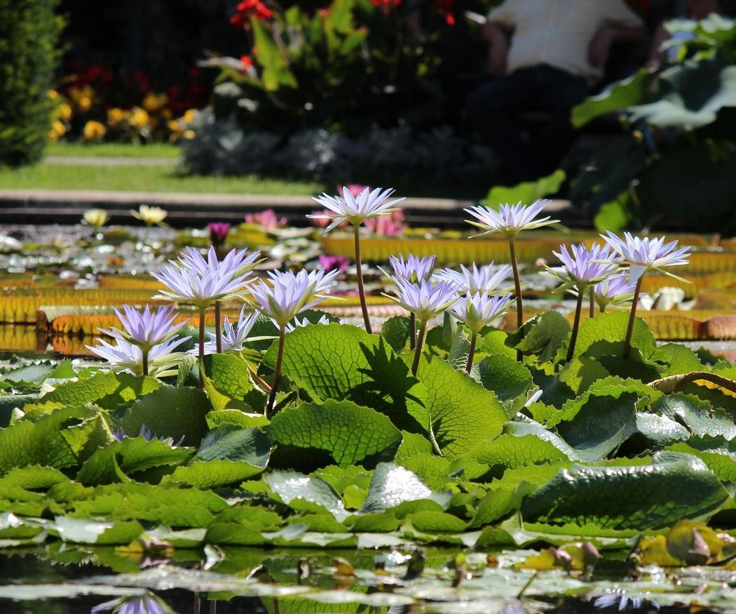¿Cómo limpiar y mantener en perfecto estado una piscina ecológica?