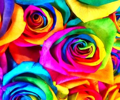 Rosas Arcoíris Naturales