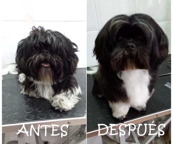 Estilismo y Peluquería canina: Servicios de Piolcan Adiestramiento Canino y Centro de formación