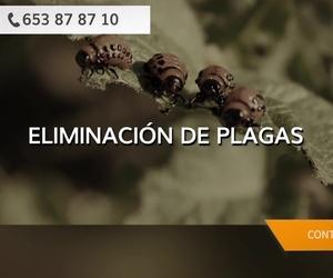 Matar cucarachas en Tres Cantos | Antipest Gestión & Control