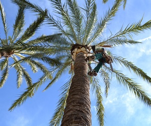 Poda de palmeras Valencia