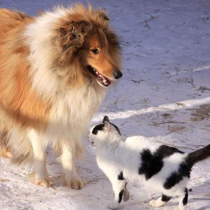 Cómo prevenir enfermedades en perros y gatos