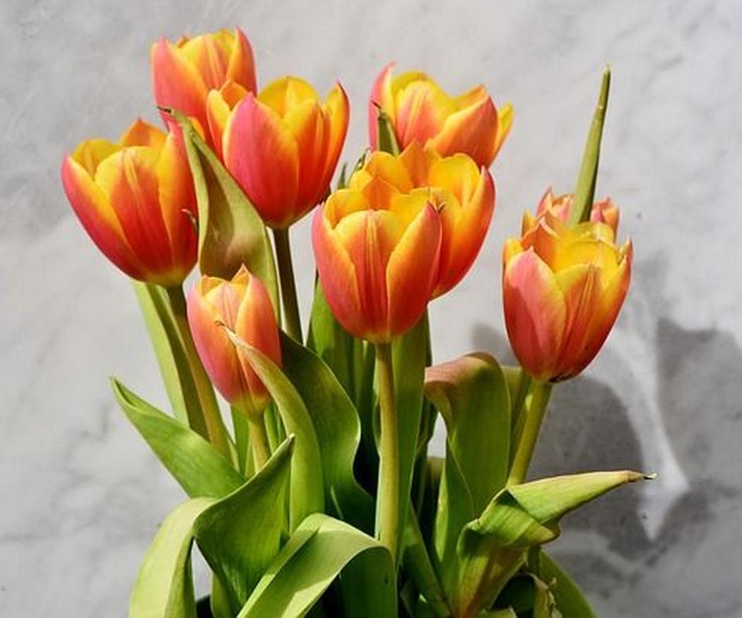 Regalar flores por el Día de la Madre
