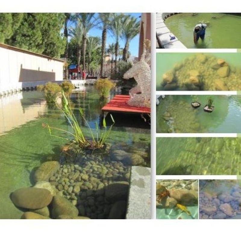 Beneficios para los estanques públicos: Tratamiento de aguas de SOB Distribuidores