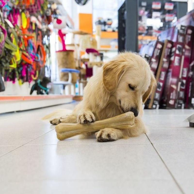 ¡¡Nos vemos a la vuelta!!: Servicios de Nueva Enseñanza Escuela Canina
