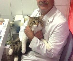 Cuidados veterinarios a un lince