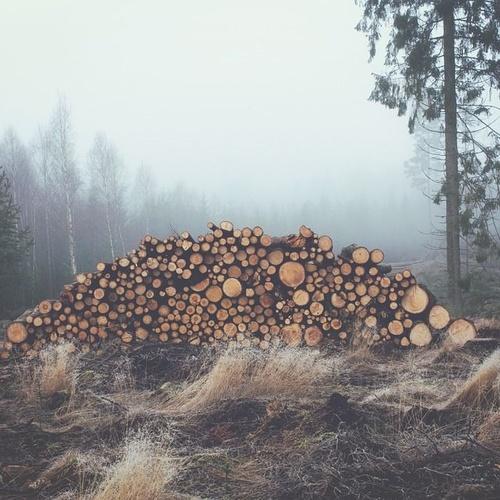 Comprar madera de pino en Ibiza