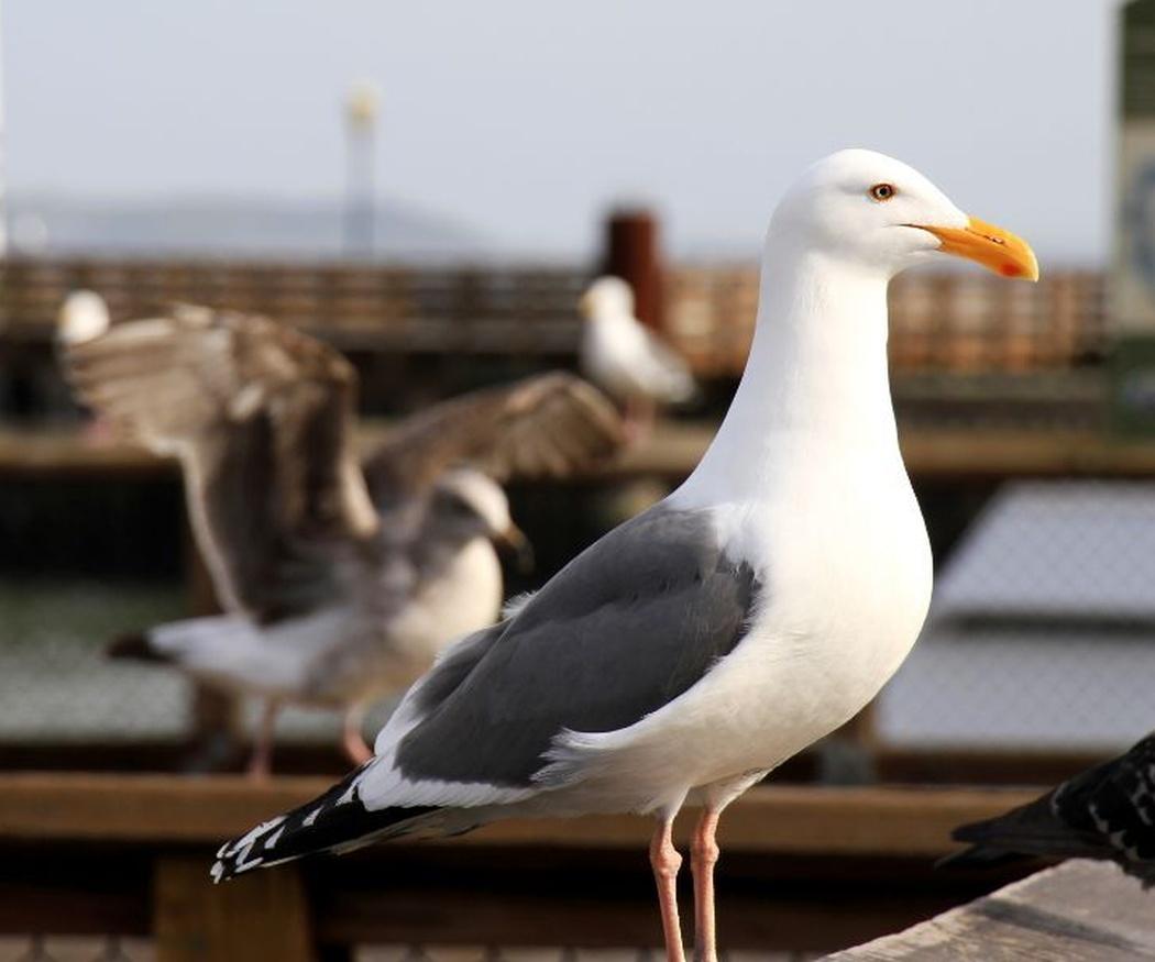 Problemas que plantean las aves cuando son plagas
