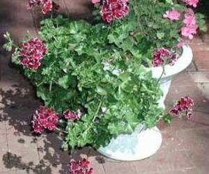 Todos los productos y servicios de Jardinería: El Abeto