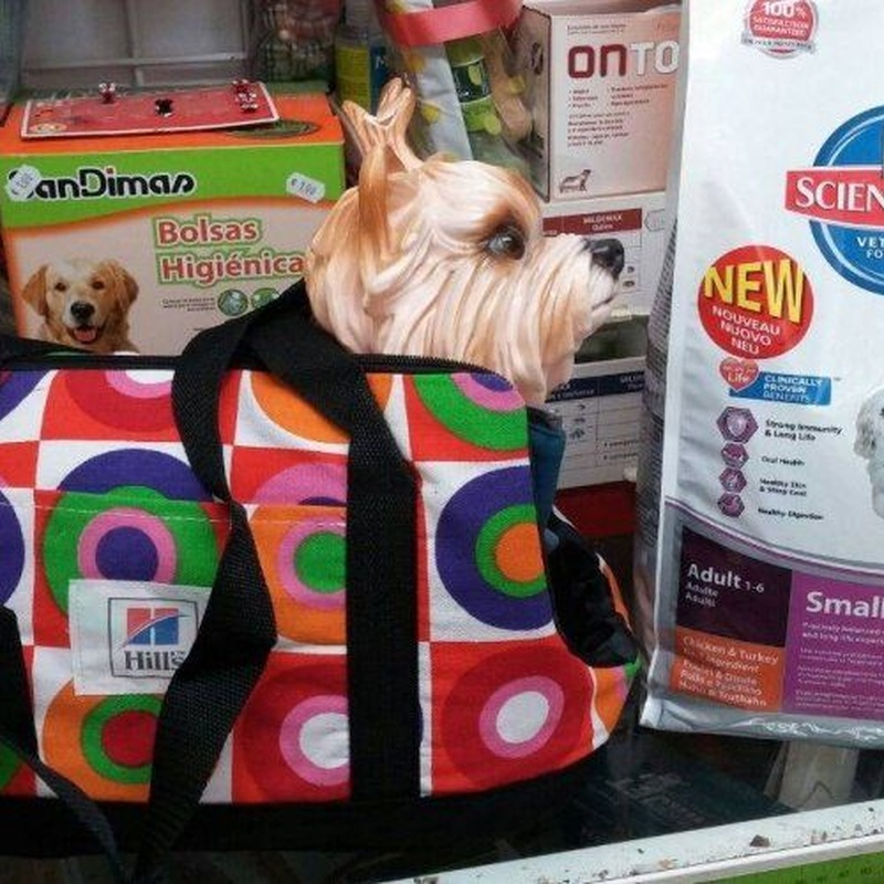 Accesorios para mascotas: Productos de Centro Veterinario Mazarredo