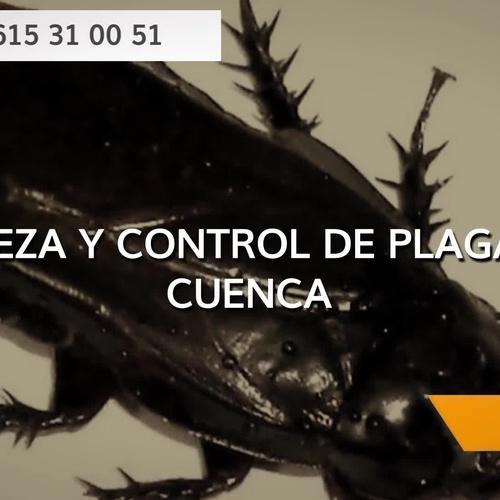 Empresas de desinfección en Cuenca | Limpiezas y Control de Plagas Jake