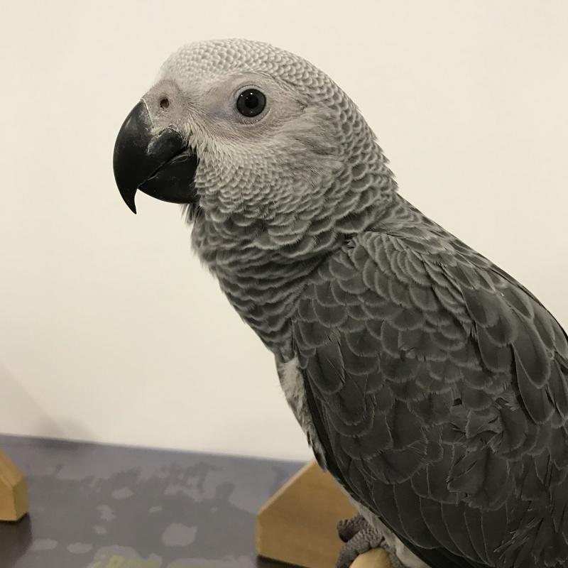 Residencia para animales exóticos: Servicios de Urgencias 24 horas