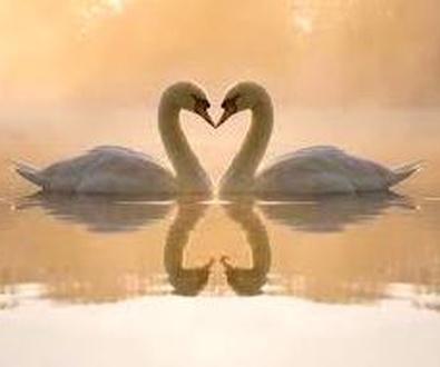 El amor incondicional