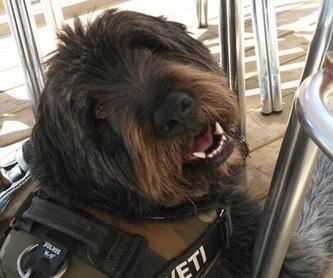 Educación canina: Servicios de Cinopolis Adiestramiento y Educación Canina