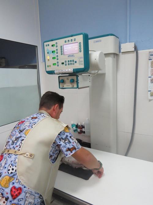 Fotos de Veterinarios en Gran Tarajal | Clínica Veterinaria Gran Tarajal