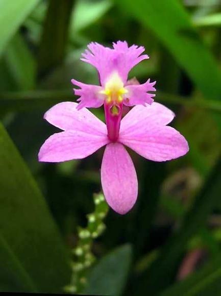 Ángel de la Visión - Orquídea amazónica: Terapias de Terapias Alternativas Isabel