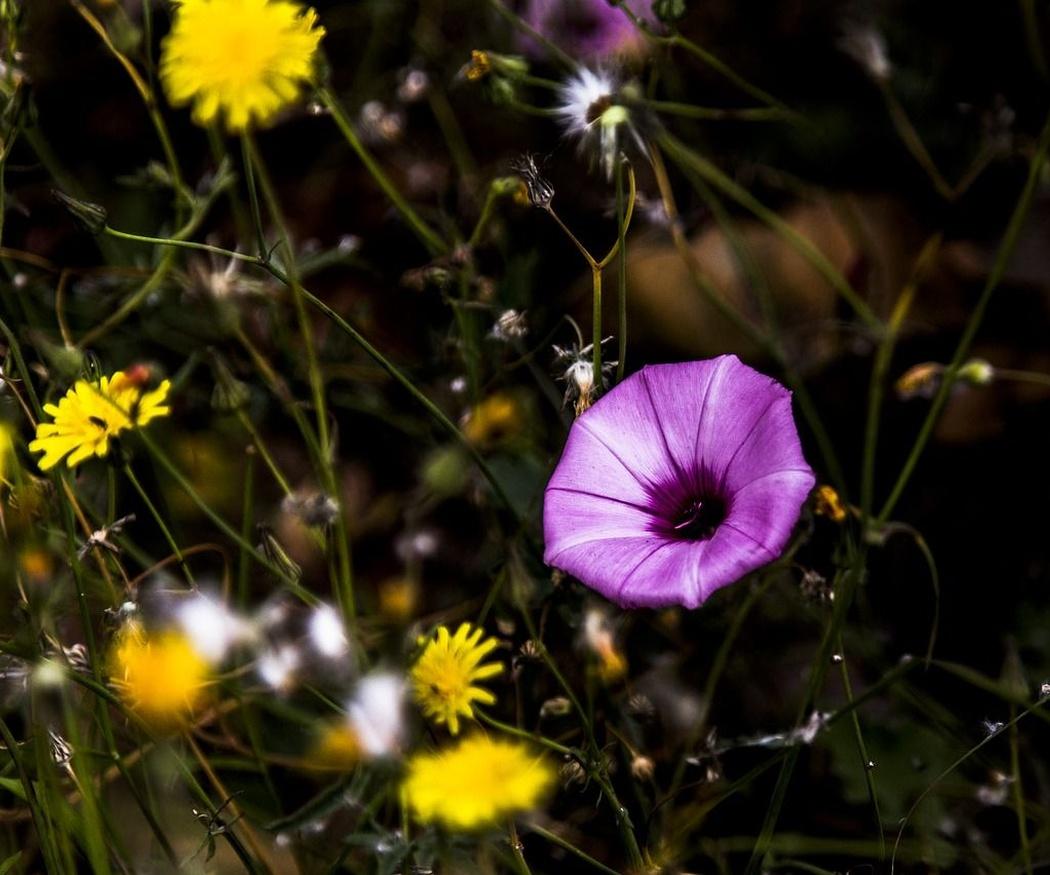 Las flores de Bach y sus propiedades