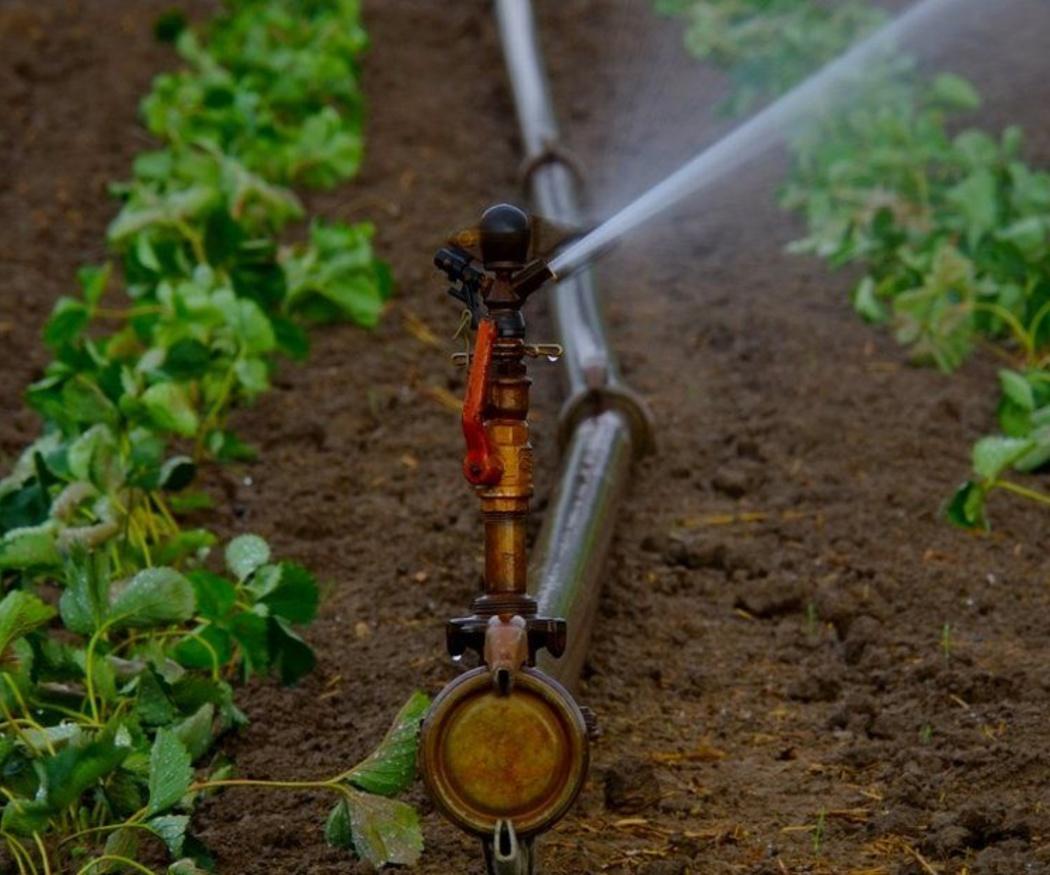 Tres tipos de riego de jardín