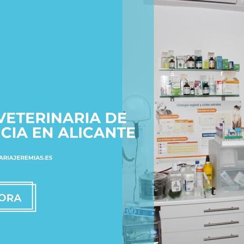 Clínica veterinaria en Alicante | Clínica Jeremías