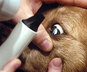 oftalmología veterinaria  en Camarma de Esteruelas