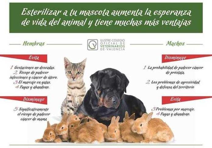 Esterilización mascotas Valencia