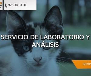 Veterinarios baratos Zaragoza | Clínica Veterinaria Symay