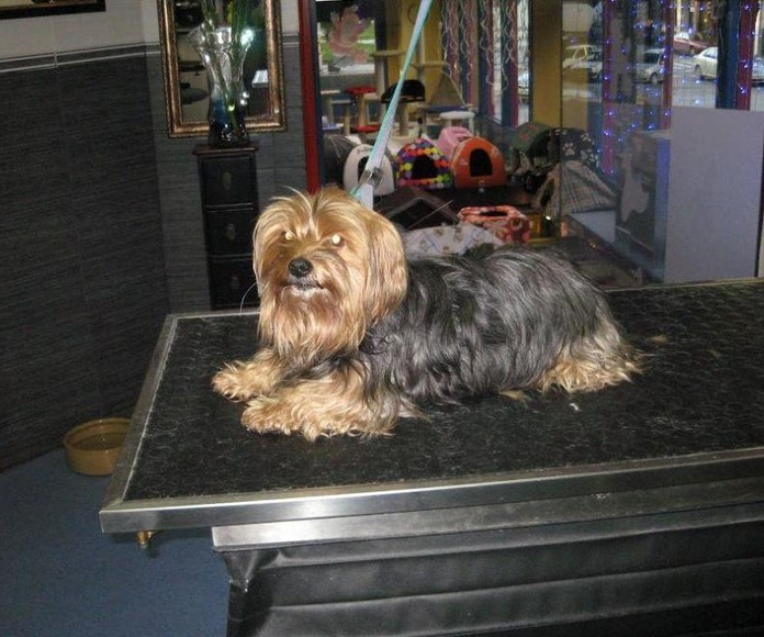 Peluquería canina: Servicios de Arabacan