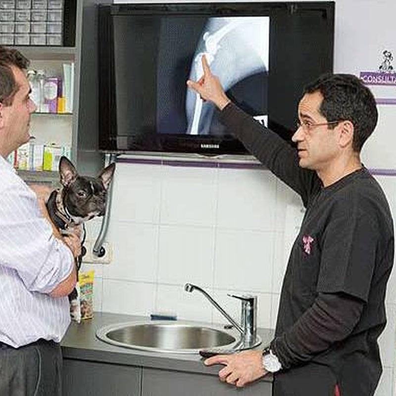 Traumatología y Ortopedia. Neurocirugía: Servicios de Centro Veterinario Sur