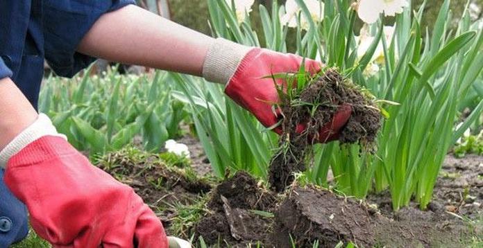 Mantenimiento de jardines: Servicios de Basklean