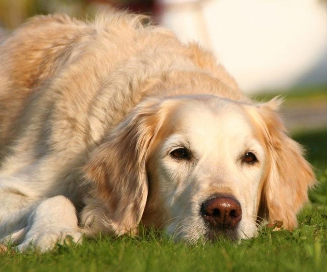 Tu mascota también disfrutará de un jardín cuidado