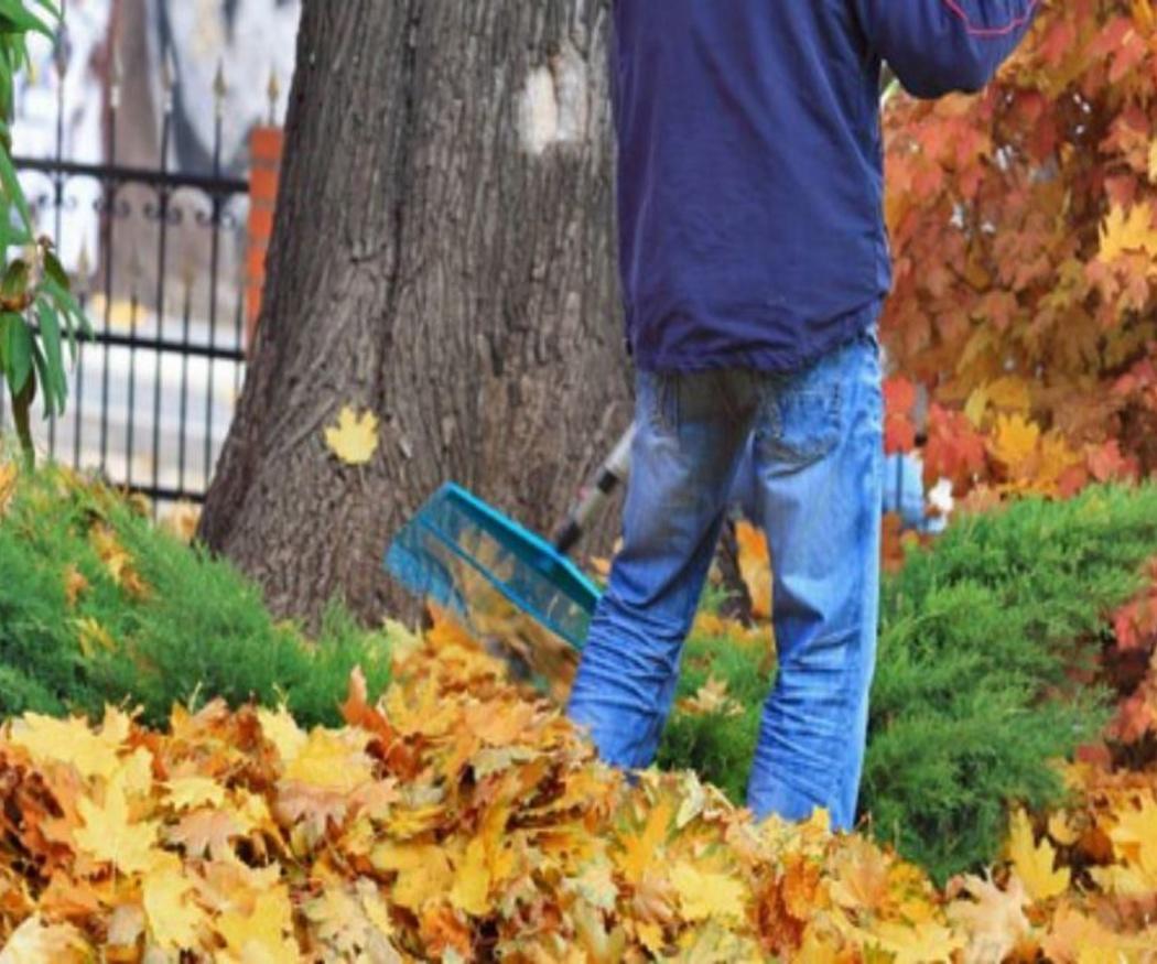 Claves para el cuidado de tu jardín en invierno