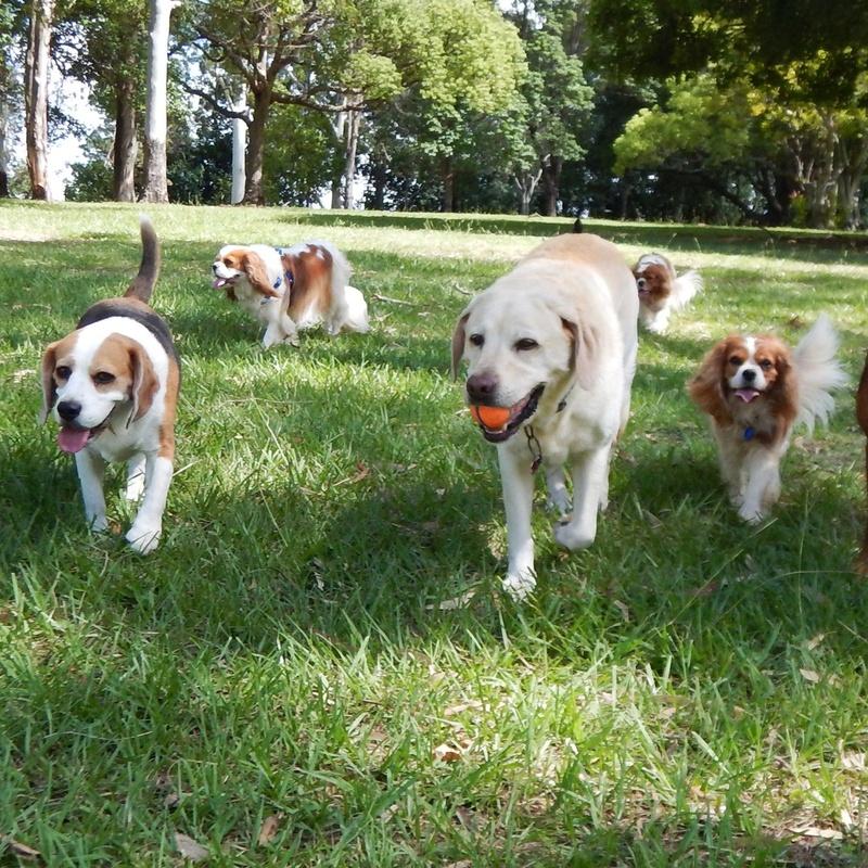 Residencia de mascotas: Servicios de Megamascotas
