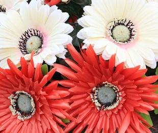 Flores para el día de Todos los Santos