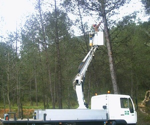 Trabajos forestales en Valencia | Moixent Forestal