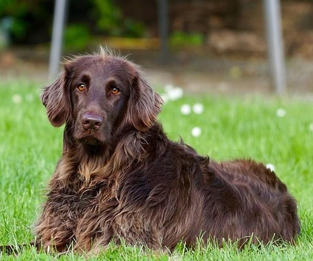 Adiestramiento canino. Órdenes básicas
