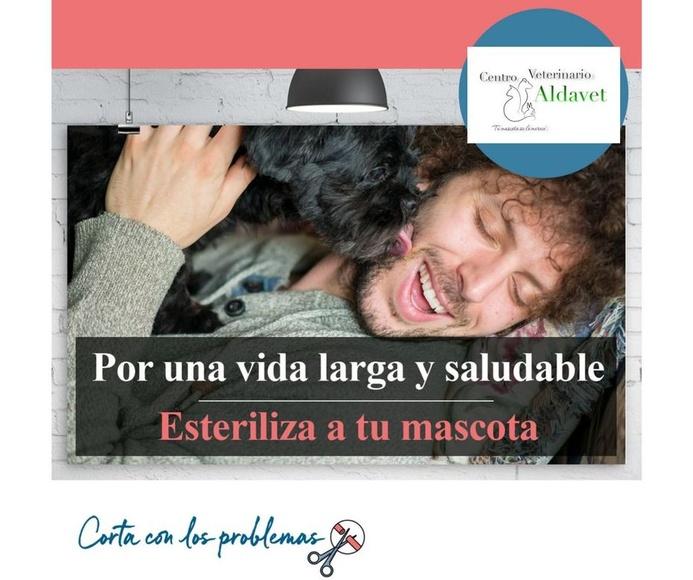 Nueva campaña de esterilización y limpieza de boca