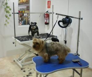 Estética canina en Corbera de Llobregat