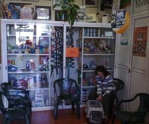 Todos los productos y servicios de Veterinarios urgencias 24horas: Centro Veterinario Ícaro
