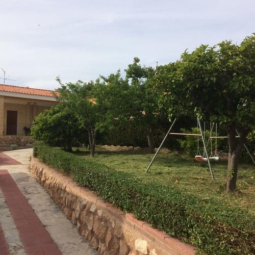 Poda de árboles en Valencia | Jardinería Vicente Salcedo