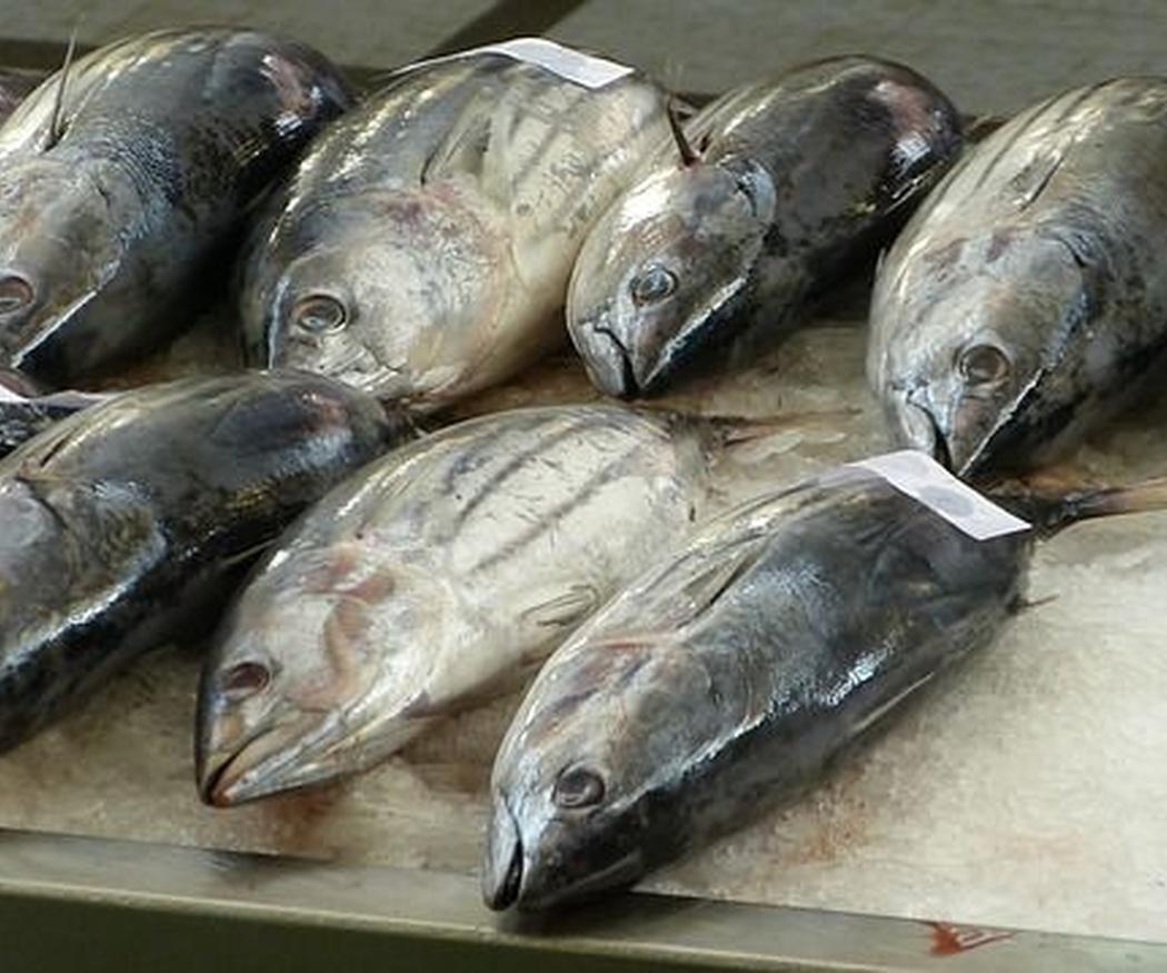 Alimentos típicos de la gastronomía vasca