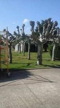 Empresas de jardinería en Llanes con precios competitivos