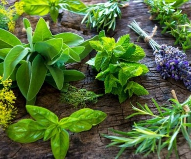 Descubre algunas plantas aromáticas para cultivar en tu huerto urbano