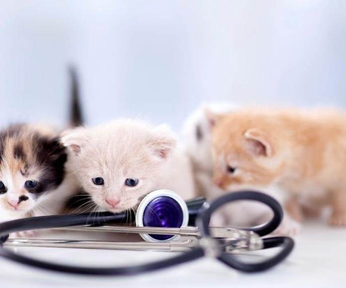 Cardiología: Servicios de Clínica Veterinaria Layos