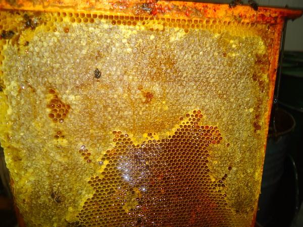 Cuadro con miel