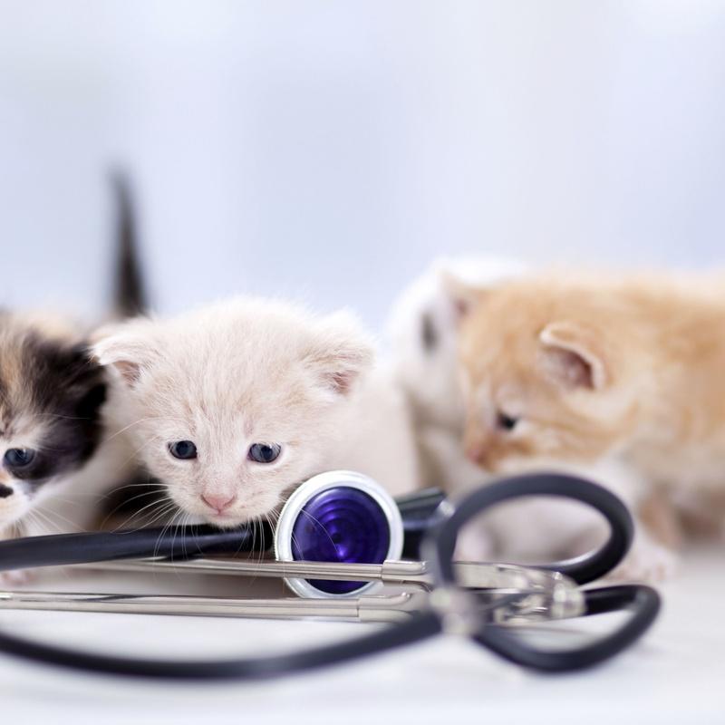 Medicina preventiva y programa de vacunaciones: Servicios  de Centro Veterinario Bienestar Animal Almerimar
