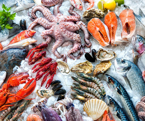 Mayorista de pescados en Canarias