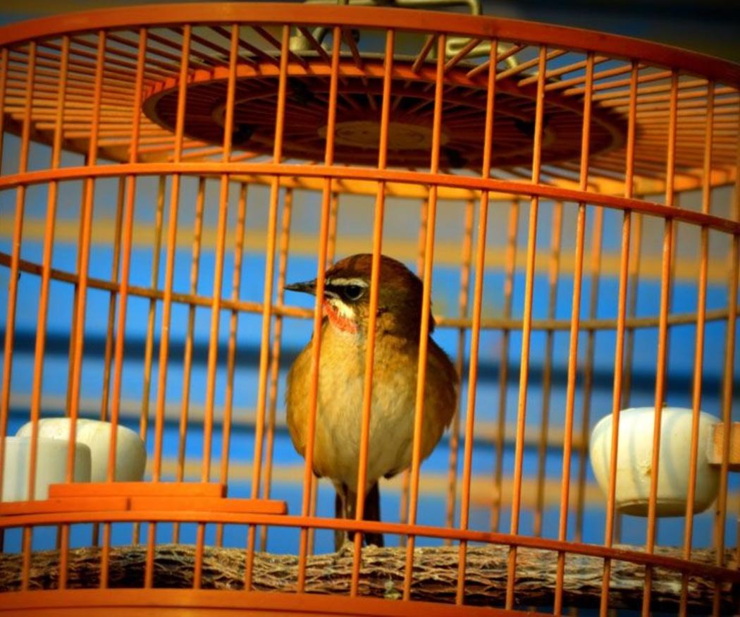Accesorios básicos para pájaros