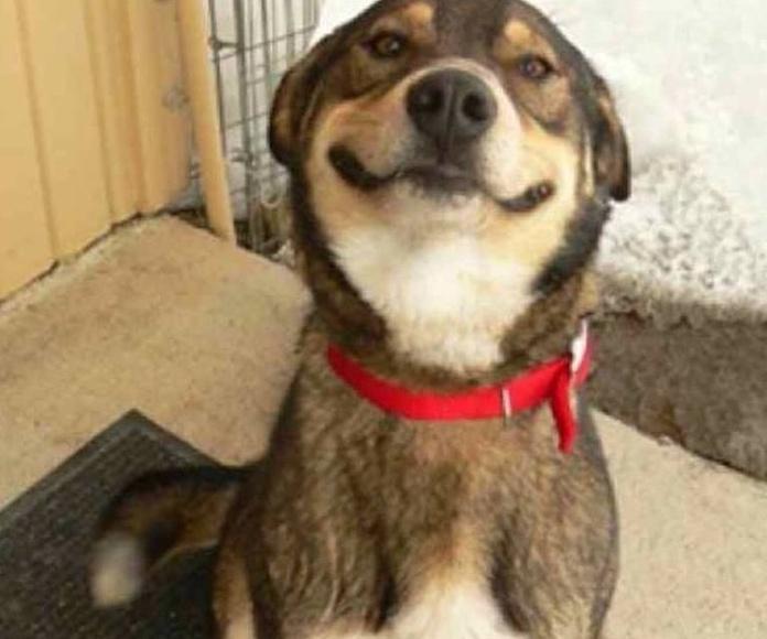 Limpieza de boca : Servicios veterinarios de Pulso Animal