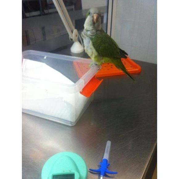 Identificación: ¿Qué hacemos? de Clinica Veterinaria Tot Exotics Zoolandia