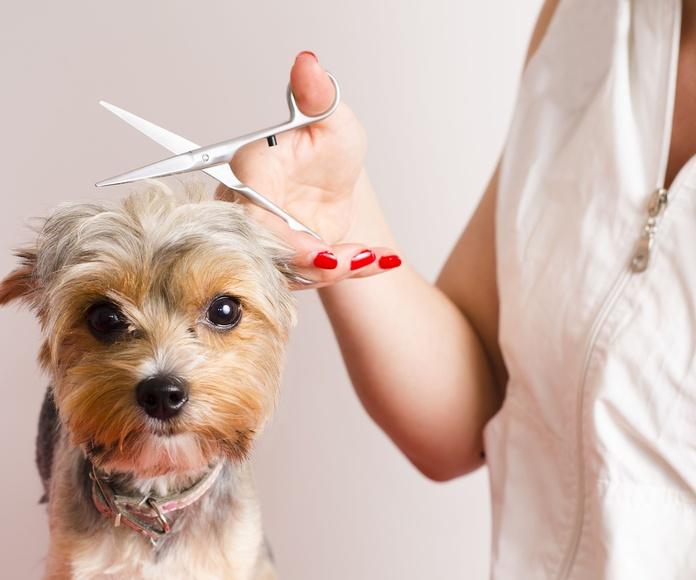 Peluquería canina: Productos y servicios de Floristería Miranda